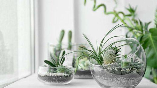 Tips for landscaping a cactus garden